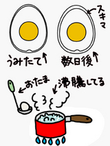 殻剥きしやすいゆで卵