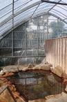亀の甲温泉・ビニールハウスの露天