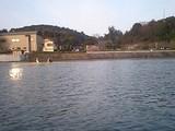 近畿大学女子2x と 石山寺前の桜