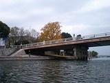唐橋と銀杏
