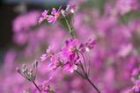 家の庭に咲いてる花