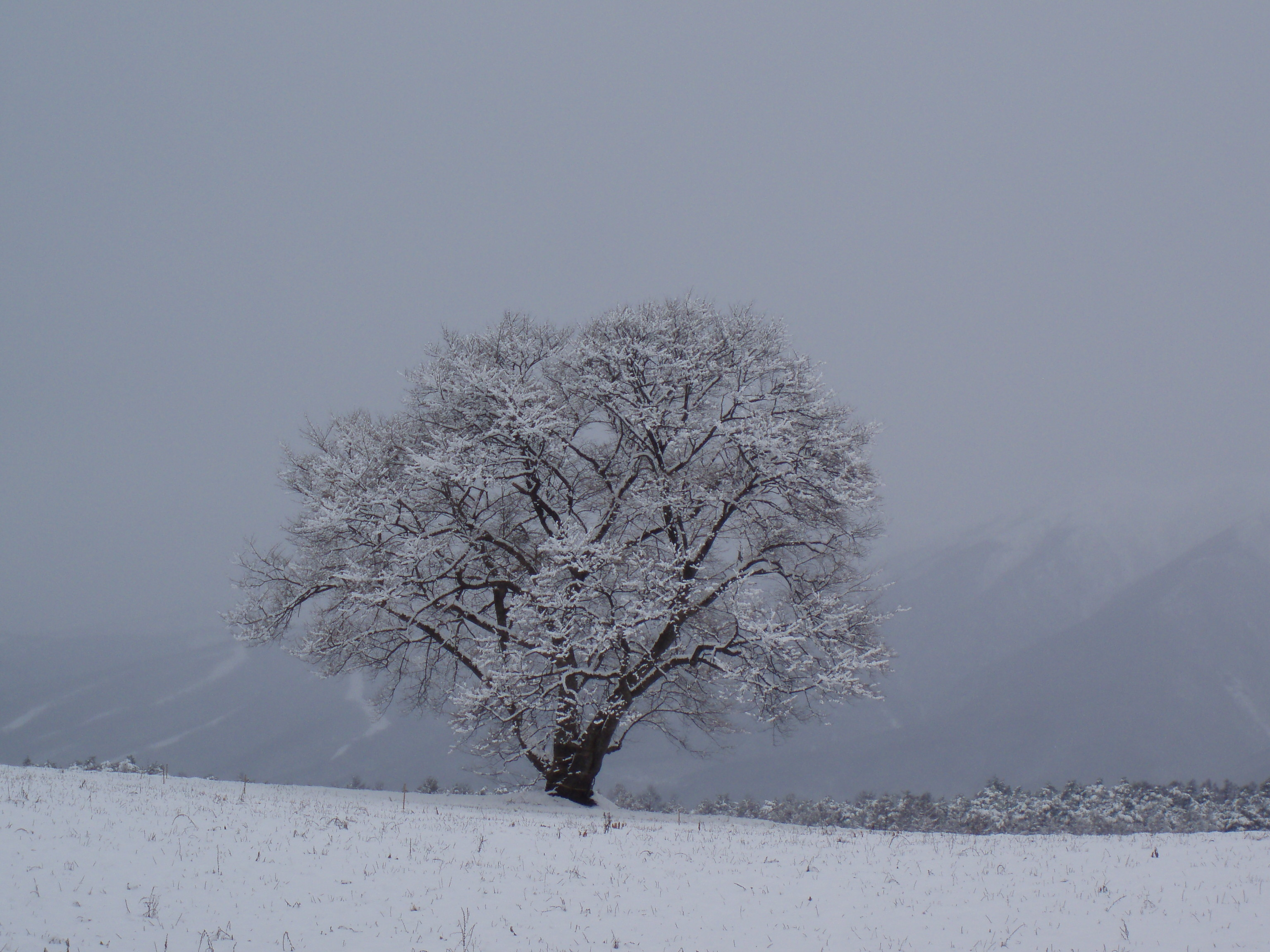 桜山公園(鬼石の冬桜)の地図アクセス・クチコミ …