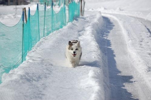 15大雪の翌日 (4)