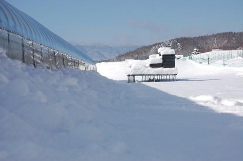 15大雪の翌日 (2)