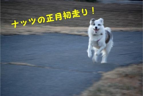 1初日の出・朝の散歩 (5)