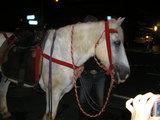 祇園祭 白馬