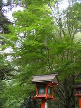 緑溢れる鞍馬寺の境内