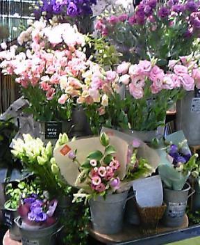 春のお花屋さん