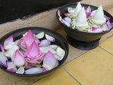 FCCアンコール、蓮のお花