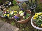 反対から撮った並んだ花々