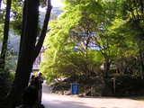 鎌倉文学館 1