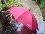 甲羅本店で頂いた傘