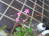 小さくて可愛い花