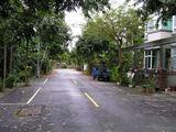 緑溢れる道