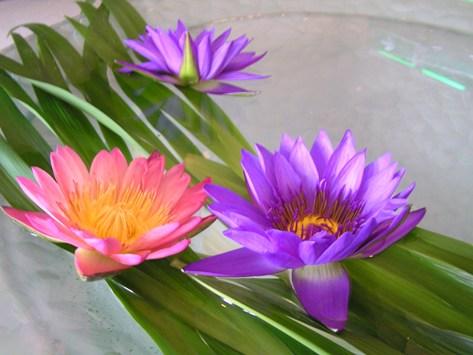 スパのロビーの蓮の花
