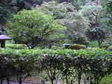 窓から見える 日本庭園
