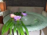サロンの水鉢には睡蓮が