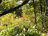 テラスから見る秋の景色
