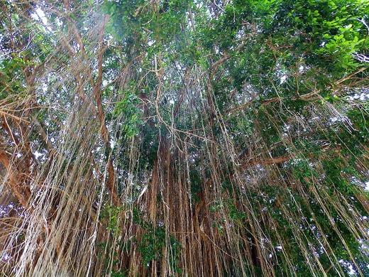 バリコレクションにあった大きな木