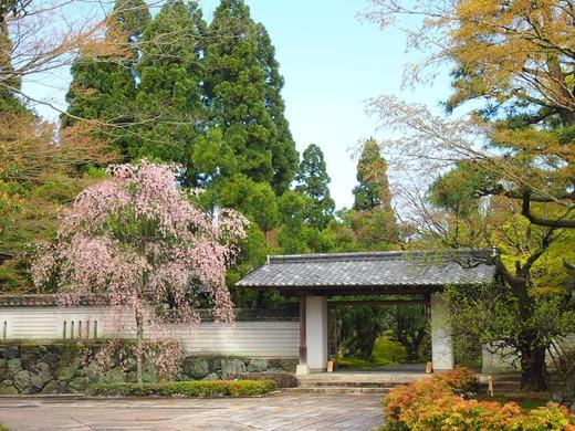 門には桜が