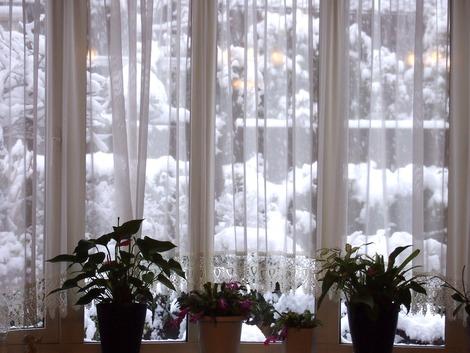 お部屋からの雪
