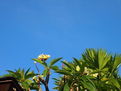 セントレジスバリ 午後の空