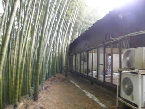 竹林とお部屋