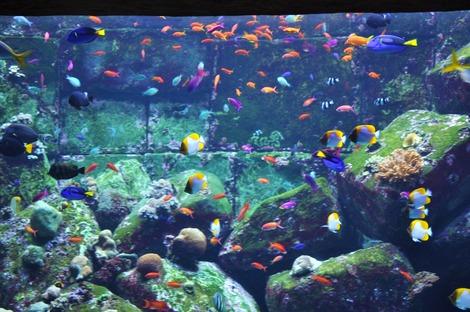 熱帯魚がたくさん