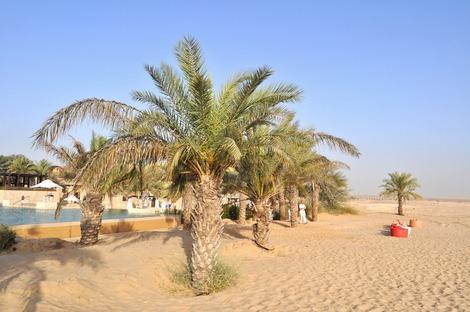プールの向こうが砂漠
