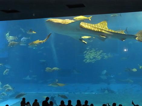 2011年1月美ら海水族館