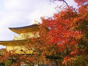 紅葉の金閣寺