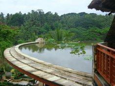 ロビー上の池