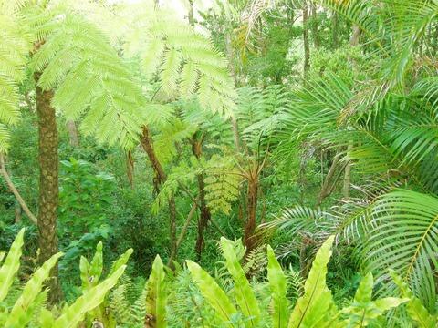 デイベッドから見るジャングル