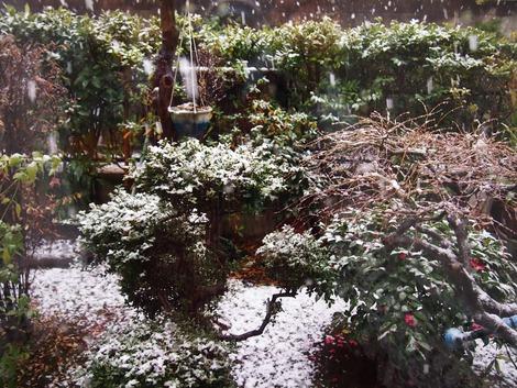2013,1 雪