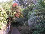 秋らしい散歩道