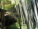 竹林が…奥にお休み処