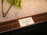 タマン(魚)の切り身