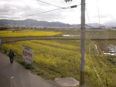 トロッコ亀岡駅付近