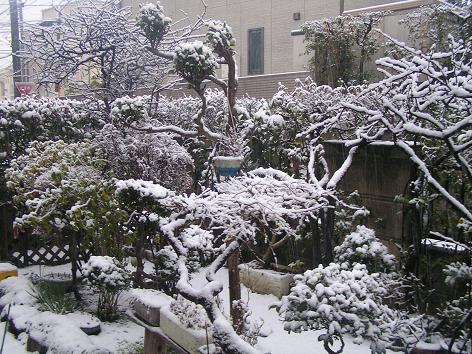 2月3日 朝の雪の庭