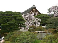 お常御殿と桜