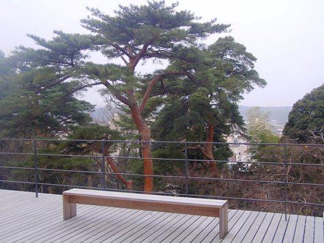方林(道場)から見る御神木