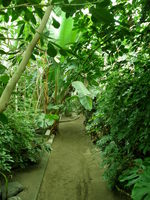ジャングル化した温室