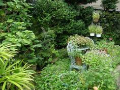トレニアに覆われた庭1