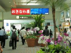 10時半、沖縄空港到着