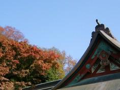 八幡宮と紅葉