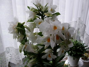 窓辺の花 2