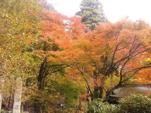 紅葉の境内