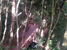 ジャングルの中を通って