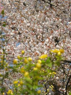 桜のほかにも