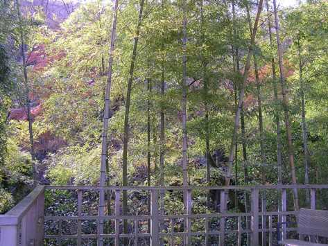 月見台からの竹林